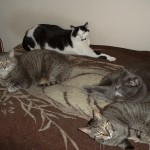 Moo Kitty, Galahad, Lance and Uther